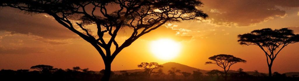 A sunset in the Serengeti with Acacia trees in the foreground