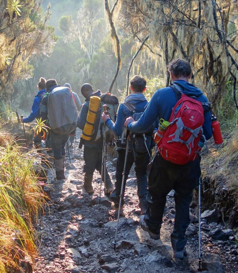 A group of hikers walking downhill with hiking poles on Mt Kilimanjaro